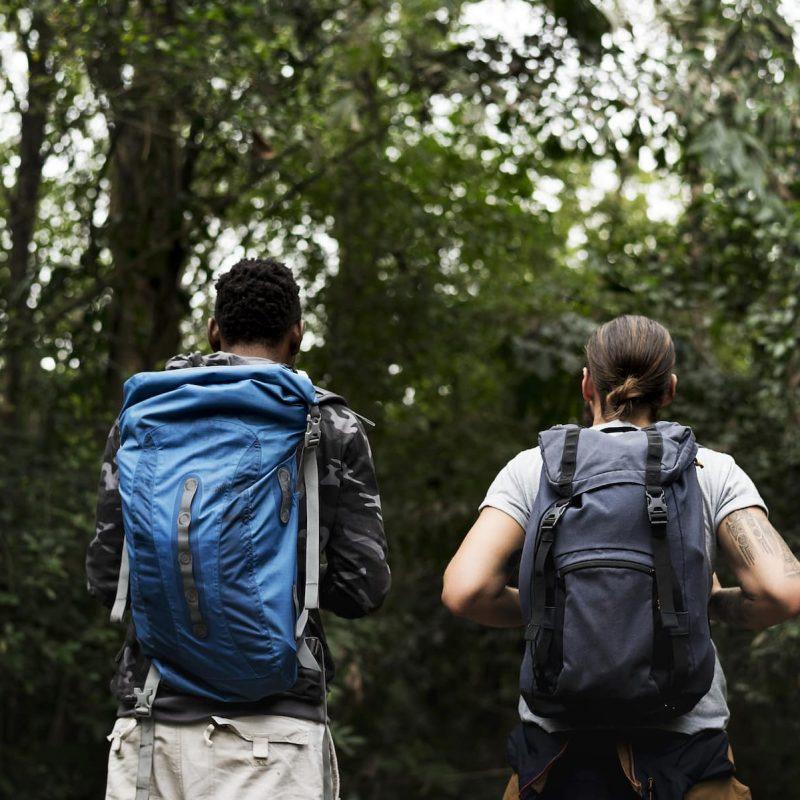 trekking-in-a-forest-PZYZ4BN